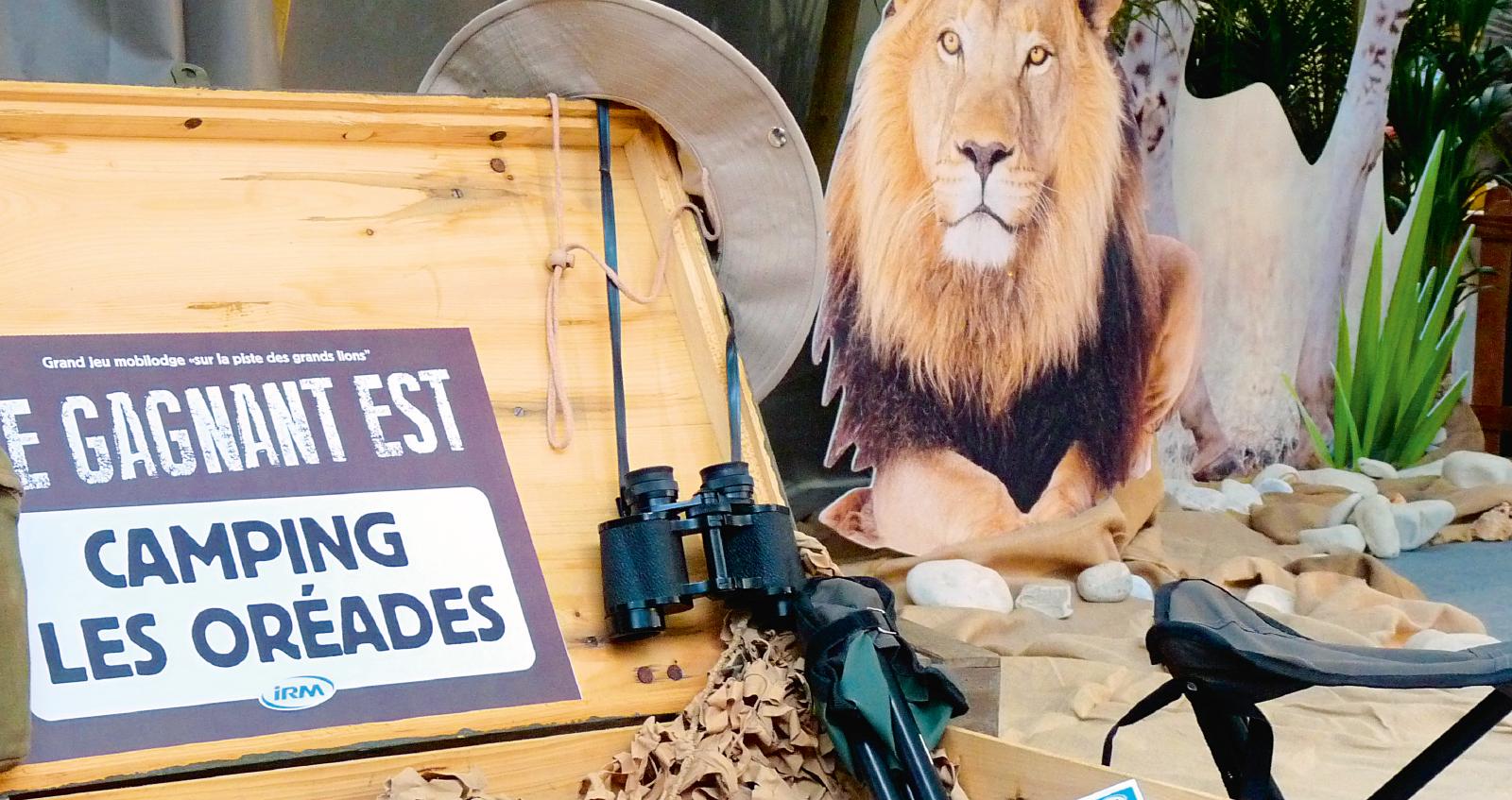 Sur la piste des grands lions